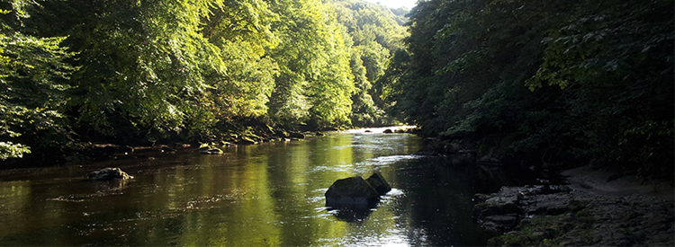Support Us river Swale image