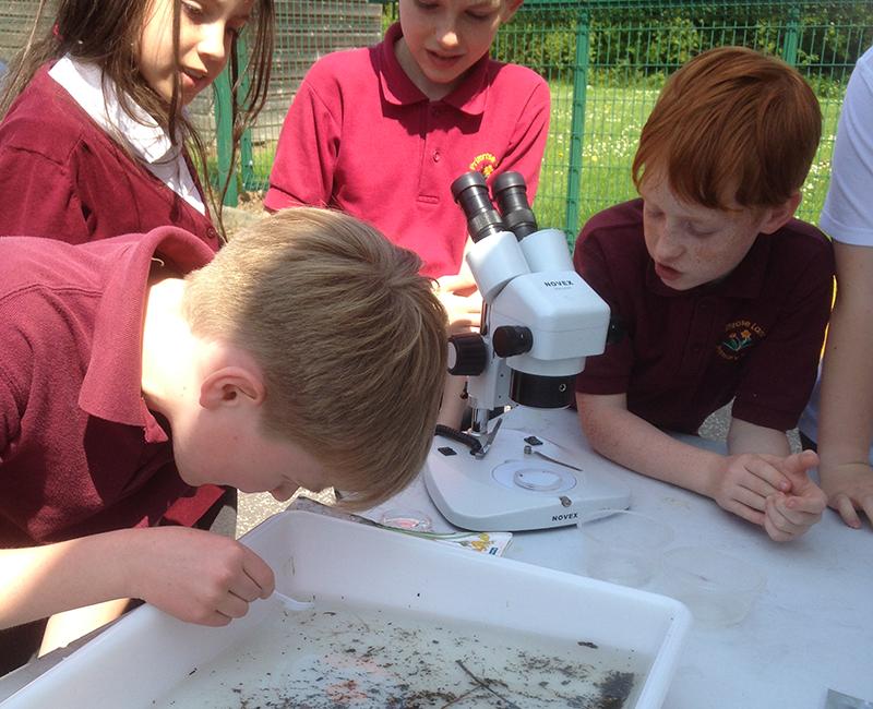Identifying freshwater invertebrates, Primrose Lane Primary, Boston Spa