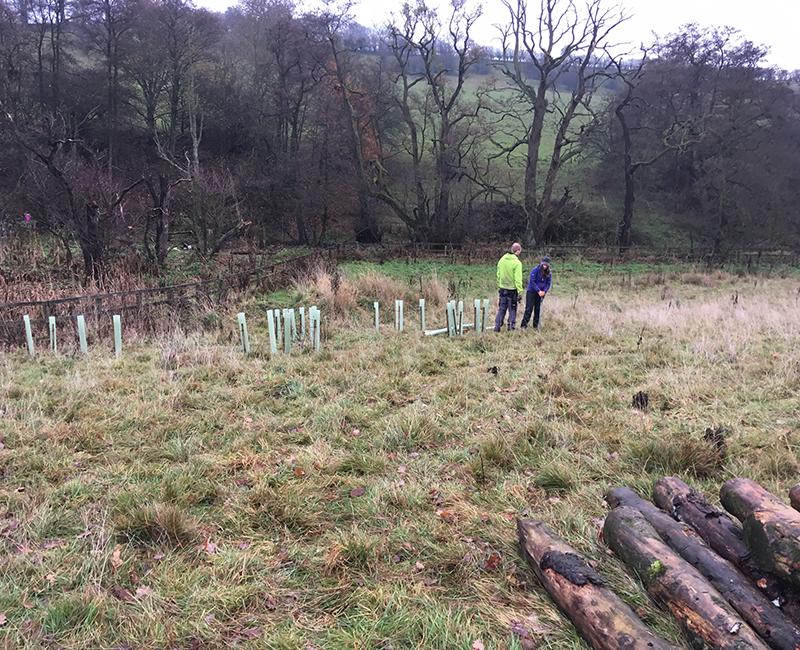 Tree Planting Mott Macdonald