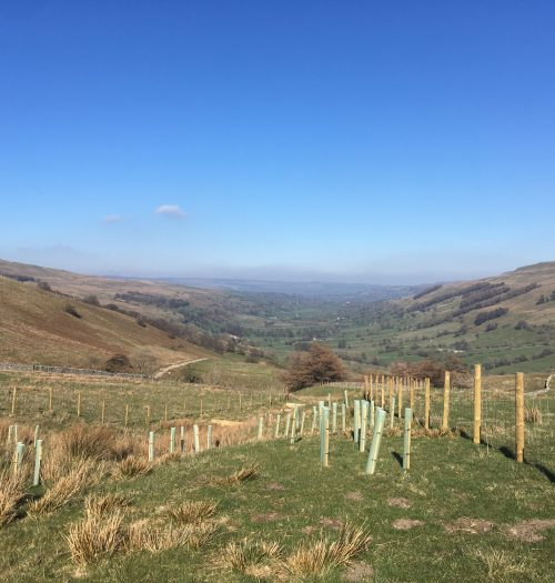 Catchment Planting at Kidstones Pass, Bishopdale