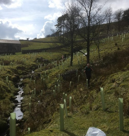 Raffen Gill Tree Planting
