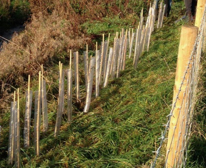 Volunteering 10 Hedge planting